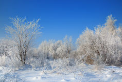 Wild winter scenery with hoarfrost Royalty Free Stock Images