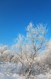 Wild winter scenery with hoarfrost Royalty Free Stock Photos