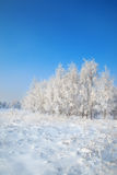 Wild winter scenery with hoarfrost Stock Photography
