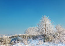 Wild winter scenery with hoarfrost Stock Photo