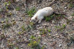 Wild wit katje stock foto's