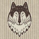 Wild wolf head Royalty Free Stock Photos