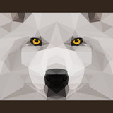 Wild wolf stares forward. Abstract geometric polygonat triangles cover Royalty Free Stock Images