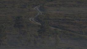Wild wolfspak die, lange afstand lopen die in 4k wordt geschoten stock video