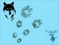 Wild wolves. Abstract blue textured background with wolf portrait and foot marks Stock Photos