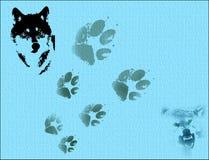 wild wolves Arkivfoton