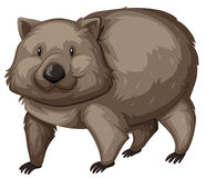 Wild wombat on white background Royalty Free Stock Photo