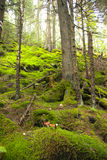 Wild wood Royalty Free Stock Image