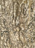 Wild wood surface Royalty Free Stock Images