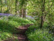 Wild woodland Flowers  Bluebells Royalty Free Stock Photos
