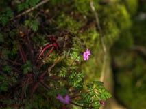 Wild woodland Flowers Royalty Free Stock Image