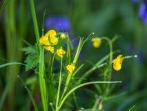 Wild woodland Flowers Stock Images