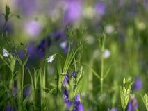 Image of Wild woodland Flowers Stock Images