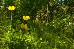 Wild Woodland Plants. Landscape. Glenashdale Forest, Arran, Scot Royalty Free Stock Images