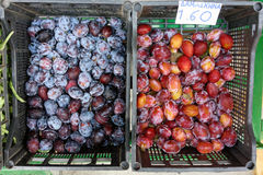 Wild Yeast on Ripe Red Plums Royalty Free Stock Images