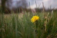 Wild Yellow Flower Flowers royalty free stock photos