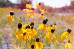 Wild yellow flowers royalty free stock photos