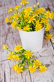 Wild yellow flowers in bucket Stock Image