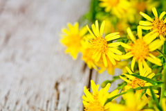 Wild yellow flowers Stock Photography