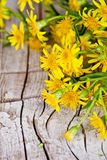Wild yellow flowers Royalty Free Stock Image