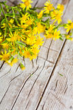Wild yellow flowers Stock Images