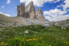 Wild yellow flowers near Tre Cime di Lavaredo Drei Zinnen in Alto Adige, Italy. Europe royalty free stock images