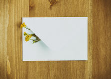 Wild yellow flowers with white paper envelop on wooden background. Flat lay. Top view. Stock Photography