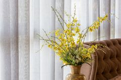 Wild yellow orchid in a vase. Wild yellow orchid in a ceramic vase decorated near a sofa and white curtain royalty free stock photography
