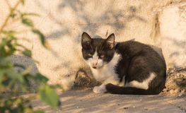 Wild young cat take sunbath Royalty Free Stock Photos