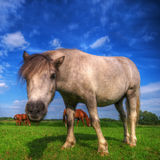 Wild young horse on the field Stock Photos