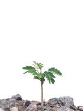 Wild young plant Royalty Free Stock Photos