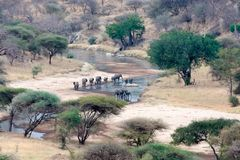 Wildbeest crossing river in Tarangire National park Tanzania. With dust in the air and blue sky Royalty Free Stock Photos