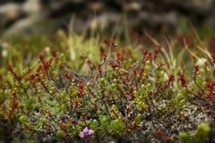 Wildberry Busch stockfotografie