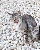 Wildcat Stock Photography