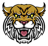 Wildcat Bobcat Mascot. An angry looking wildcat or bobcat mascot animal character Stock Images