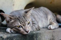 Wildcat bonito Foto de Stock