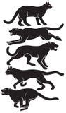 wildcat Royalty Free Stock Image