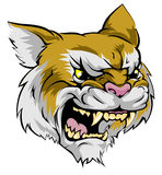 Wildcat mascot character Royalty Free Stock Photo