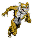 Wildcat sports mascot running Royalty Free Stock Images