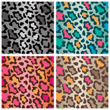Wildcat Spots Patterns Royalty Free Stock Photography