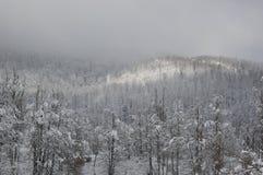 Wildderness природы Стоковая Фотография