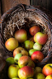 Wilde Äpfel im Korb Lizenzfreie Stockfotografie
