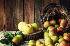 Wilde Äpfel und Birnen im Korb Stockbilder