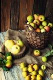 Wilde Äpfel und Birnen im Korb Stockfoto