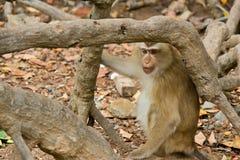 Wilde aap in een bos stock foto's
