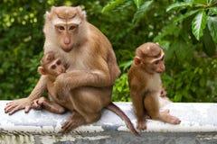 Wilde aap met een baby Royalty-vrije Stock Afbeeldingen