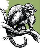 Wilde aap in zwart-wit stock foto