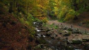 Wilde aard Bergrivier in Forest National Park ukraine stock video
