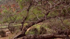 wilde aard in een canion in de bergen van Mallorca stock footage