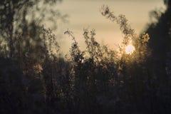 Wilde aard van Rusland in de zomer Royalty-vrije Stock Afbeeldingen